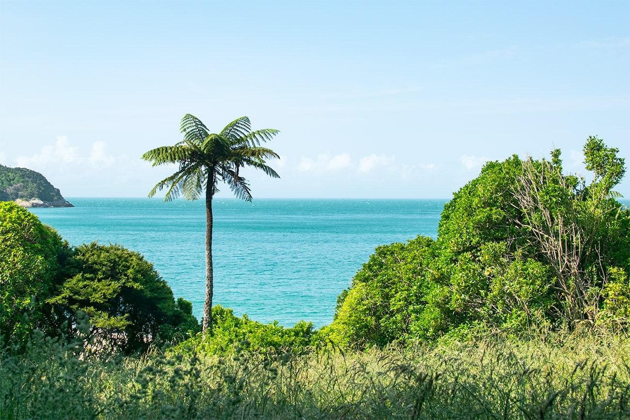 Paysage d'une plage au milieu de la forêt tropicale du parc national Abel Tasman sur l'île du Sud de Nouvelle-Zélande