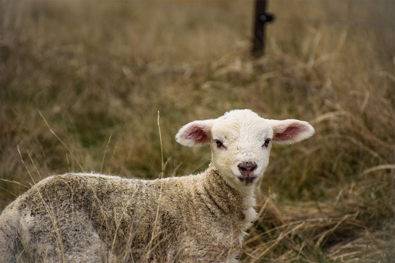 voyage pvt un an en Nouvelle-Zléande