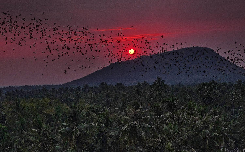 battambang chauves souris vol coucher de soleil cambodge
